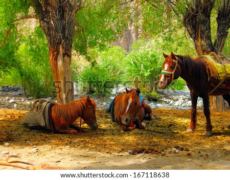 Tree beautiful chestnut domestic horses resting against the background of serene wood landscape in Leh district, Ladakh, Himalaya, Jammu & Kashmir, Northern India, Central Asia  - stock photo