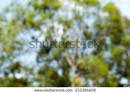 Tree bokeh blur background