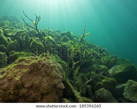 Tree branch and stones covered with algae underwater - stock photo