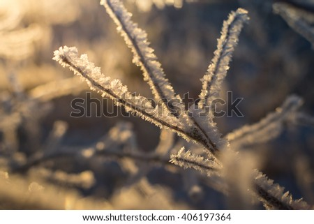 Tree branch covered with ice in the sunlight - stock photo