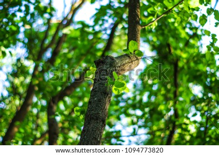 Tree branch in forest