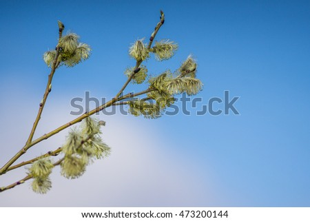 Tree branch in the spring