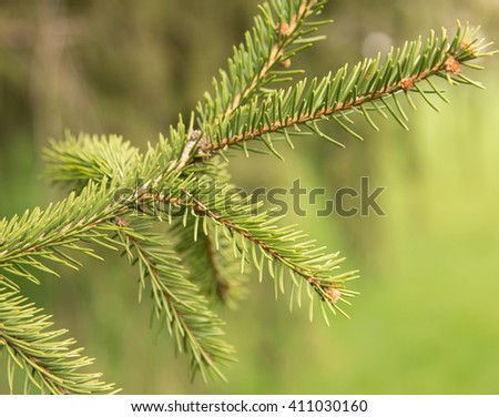 tree branch on a green background