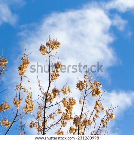 tree branch on the sky background - stock photo
