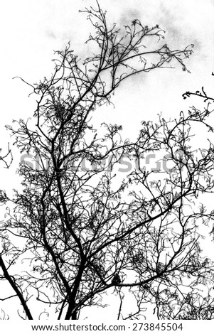 tree branch silhouette - stock photo