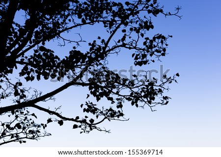Tree branch silhouette against blue sky.  - stock photo