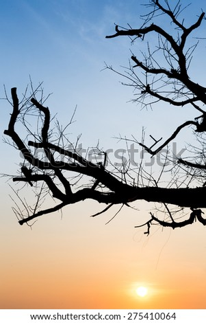 tree branch silhouette on dawn sky