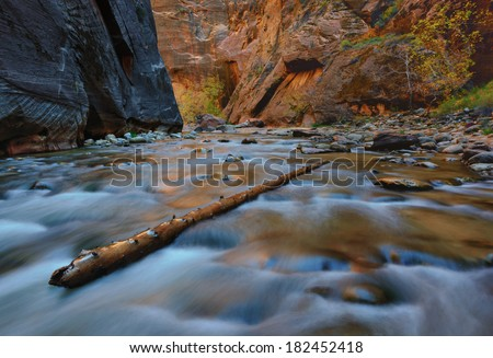 Tree branch standing diognally in the middle of the Virgin River and water is flowing around the branch, while sun is warming the wall of the narrows. - stock photo