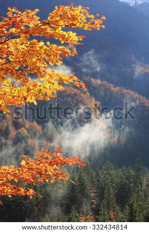 Tree branch with autumn colored leafs with healthy mixed mountain forest in the background. Seasons changing, unique sunlight concept, textured background concept.    - stock photo