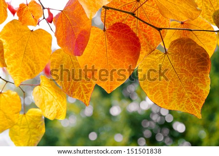 Tree branch with autumn leaves. Autumn background. - stock photo
