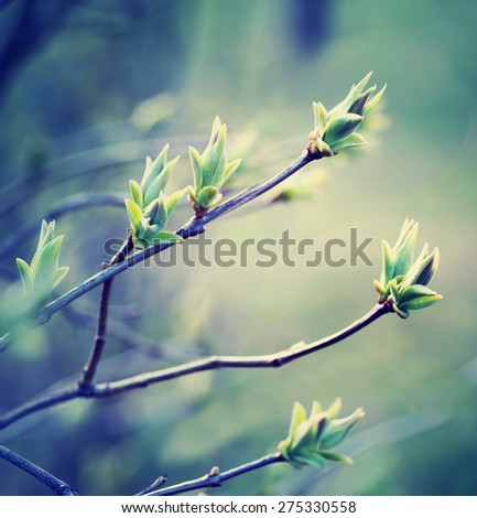 Tree branch with buds / romantic toned spring background with fresh leaves blurred and bokeh/ selective focus - stock photo