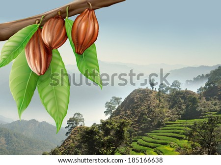 tree branch with cacao fruits on a background of mountain landscape - stock photo