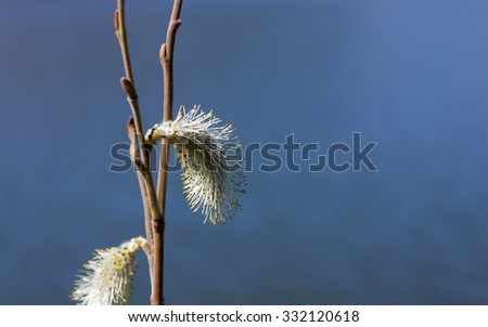Tree branch with flowers and buds in spring against blue water - stock photo
