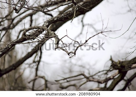 Tree branch with lichen useful as background - stock photo