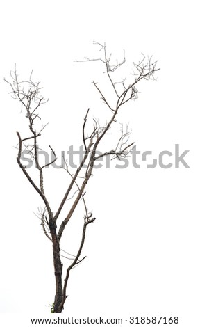 Tree branch without leaf isolated on white background - stock photo