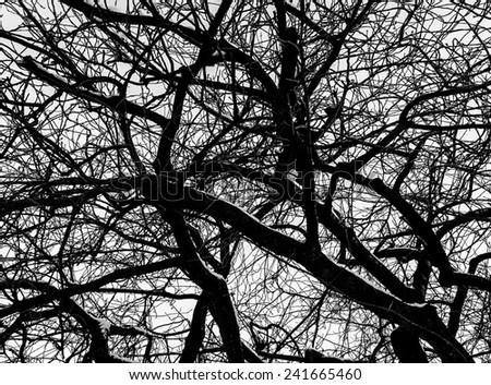 tree branches  - stock photo