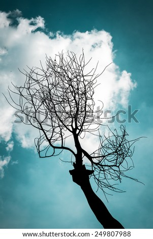 Tree Branches Against Sky - stock photo