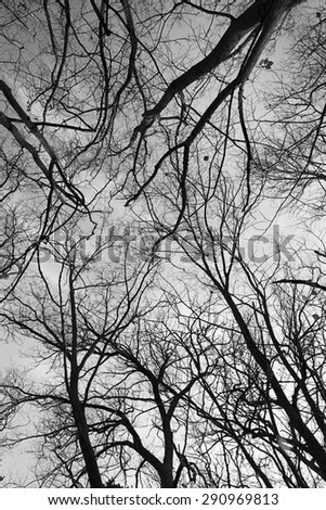 Tree Branches Against Sky Black & White