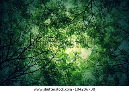 Tree branches and green leaf background, Safe the earth - stock photo