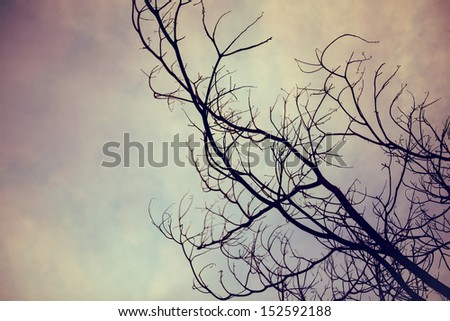 tree branches background - stock photo