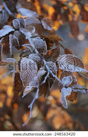 Tree branches covered with hoarfrost. Winter.  - stock photo
