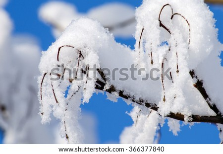 Tree branches covered with snow against the blue sky on a Sunny day