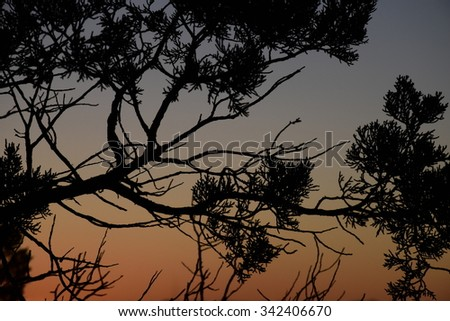 Tree Branches during sunset