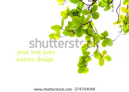 Tree branches,Green leaves on  white background - stock photo