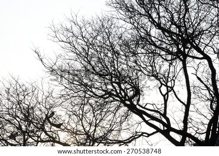 tree branches - no leaves in winter