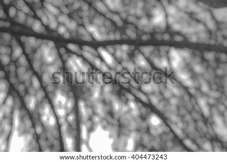 Tree branches on a sky background abstract bokeh black and white