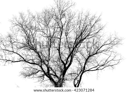 tree branches on a white background - stock photo