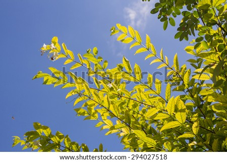 Tree branches on blue sky background - stock photo