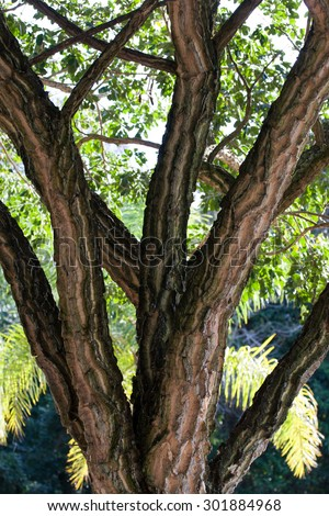 Tree branches on forest with other trees behind - stock photo