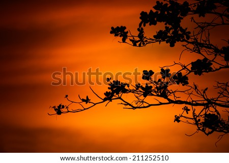 tree branches on orange background