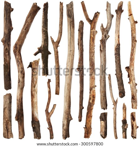 Tree branches set isolated on white background - stock photo