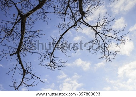 Tree branches silhouette on blue sky
