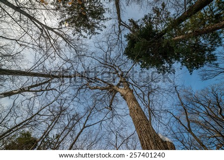 Tree branches silhouette over sky. Winter. Wide angle lens. - stock photo
