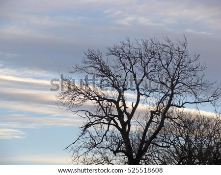 Tree branches silhouettes without foliage on evening sky background.