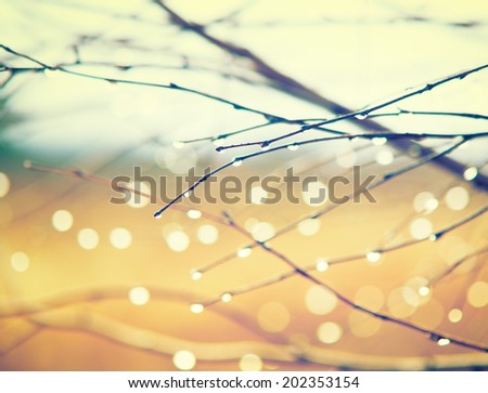 tree branches under the sleet in autumn - stock photo