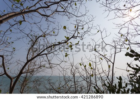 Tree branches with sea-view in background
