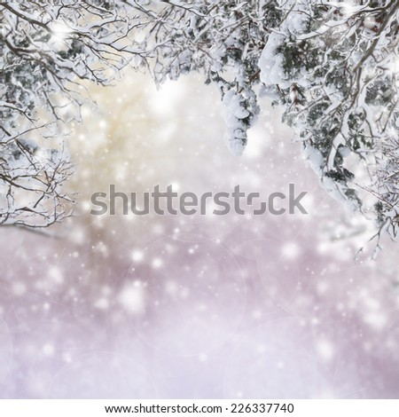 Tree branches with snow isolated over white background - stock photo