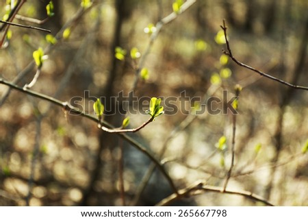 Tree bud, outdoors, closeup - stock photo