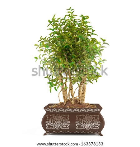 Tree bush in the pot isolated