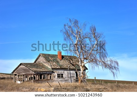 Tree by abandoned house in eastern Washington.