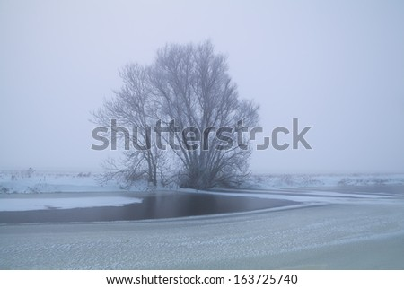 tree by frozen lake in winter fog, Holland - stock photo