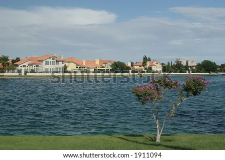 Tree by the lake homes - stock photo