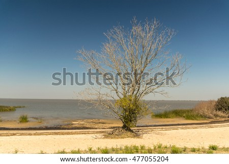 Tree by Uruguay river.
