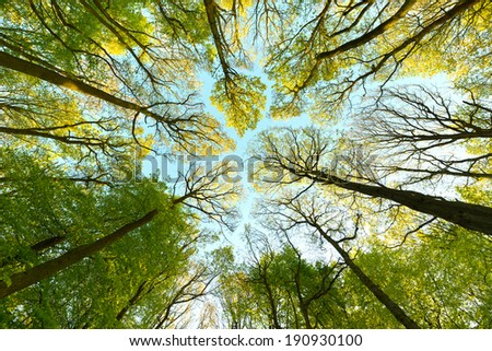 Tree canopy - stock photo