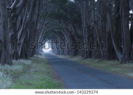 Tree canopy arching over a misty road, California, USA