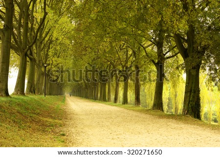 Tree Canopy, Country Road - stock photo